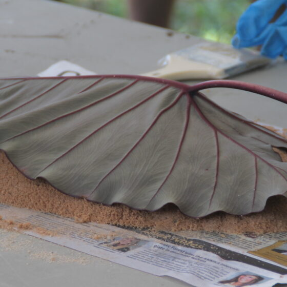 A large leaf rests face down on clay.